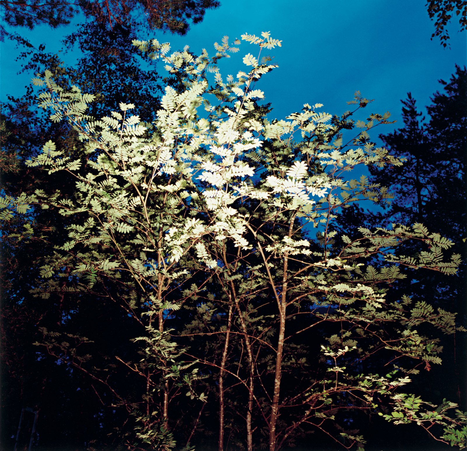 Night Lamp 23:05, 2008, C-print, 120 x 120 cm