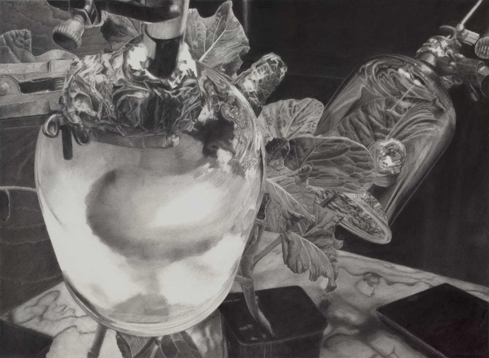 Plant Interview, 2009, pencil on paper, 51 x 69 cm