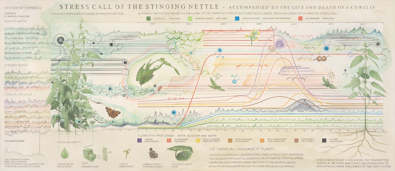 Stress Call of the Stinging Nettle, 2010, water color and pen on paper, 85 x 197 cm