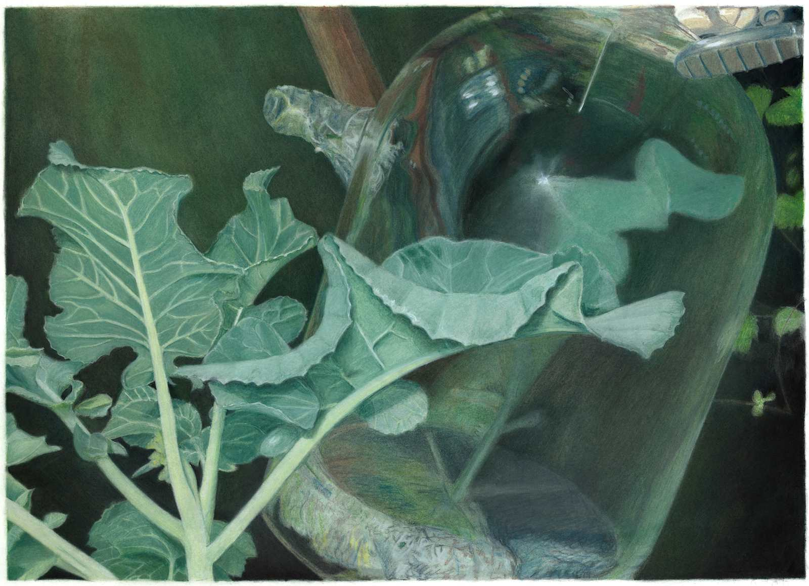 The Chemical Language of Plants, 2010, pastel on paper, 58 x 75 cm
