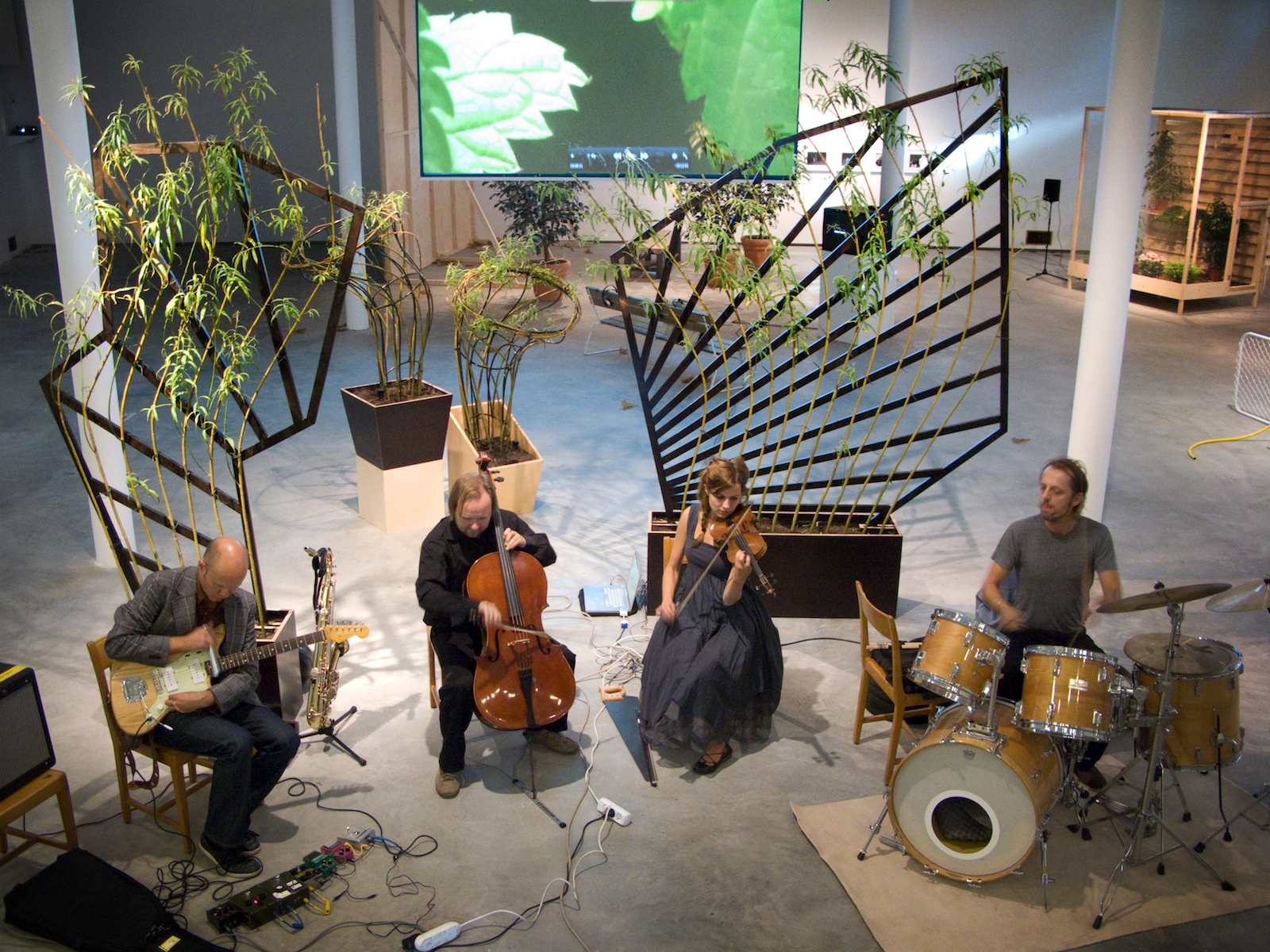 Yellow Admiral (Gul Amiral), 2010, installation, Salix + espaliers, video and musical performance Plant Drummer with the ensemble Yellow Admiral, 350 x 240 x 300 cm