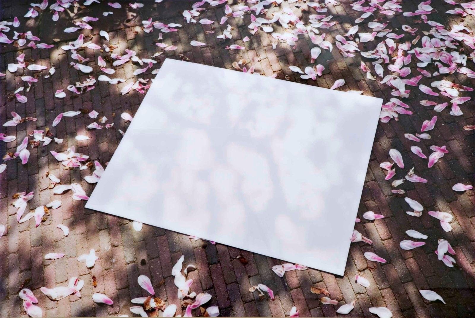 Coming up soon, 2002, C-print on di-bond, perspex, 120 x 178 cm