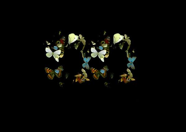 Dan Wolgers De Profundis V (fjärilar), 2013 Giclée print 29,7 x 42 cm