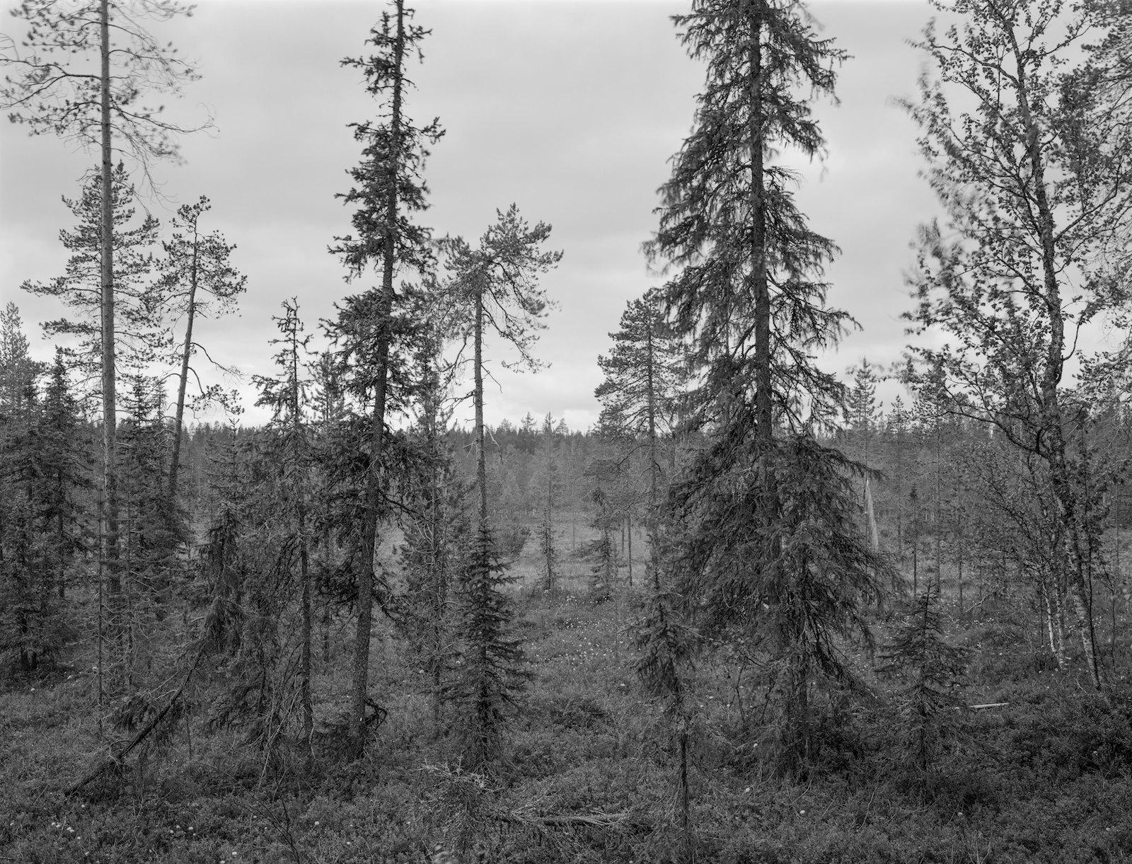 Metsä 68, Värriö, Salla, Finland, 2013, ink-jet print on baryta paper, 74 x 97 cm