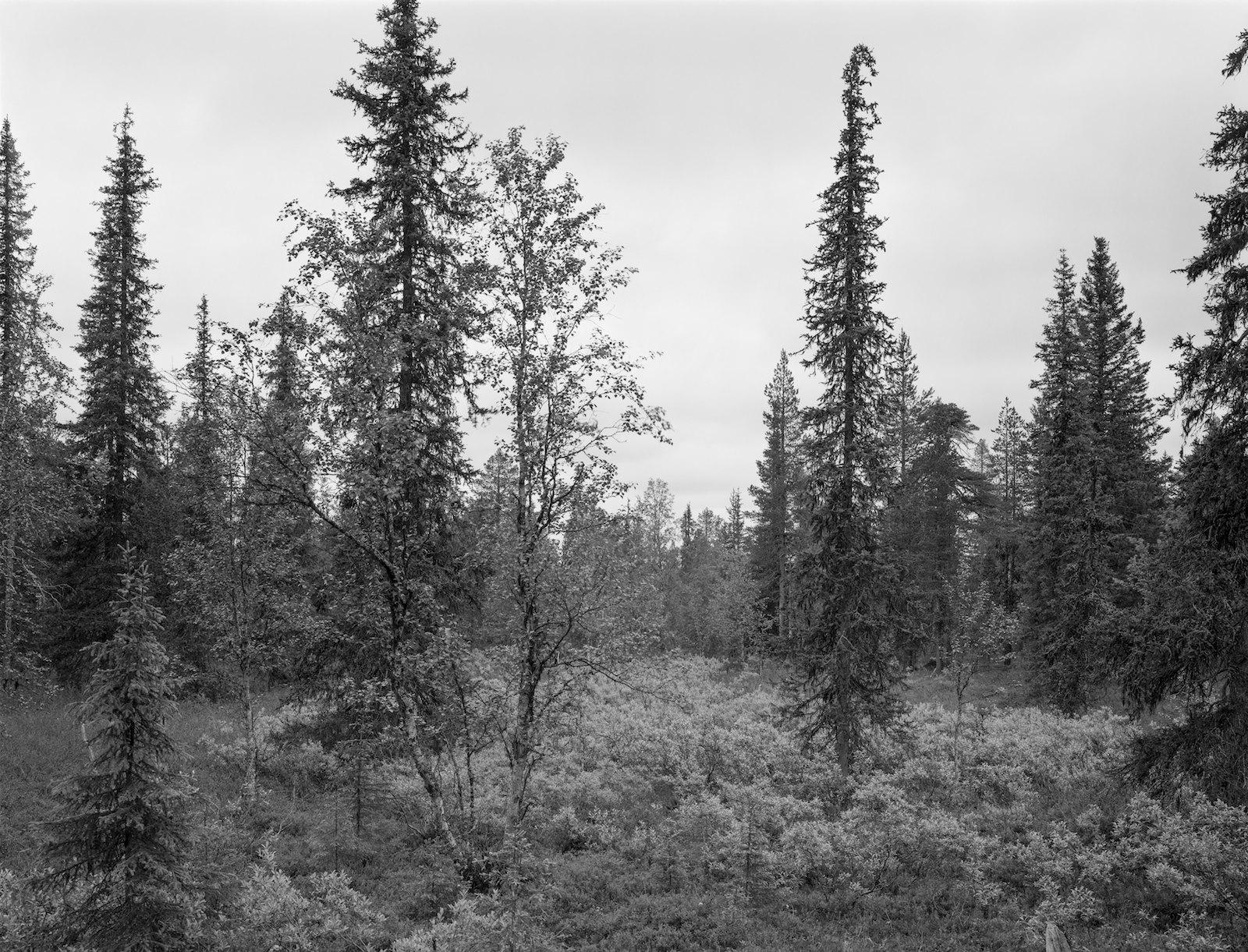 Metsä 82, Lismantie, Inari, Finland, 2013, ink-jet print on baryta paper, 74 x 97 cm