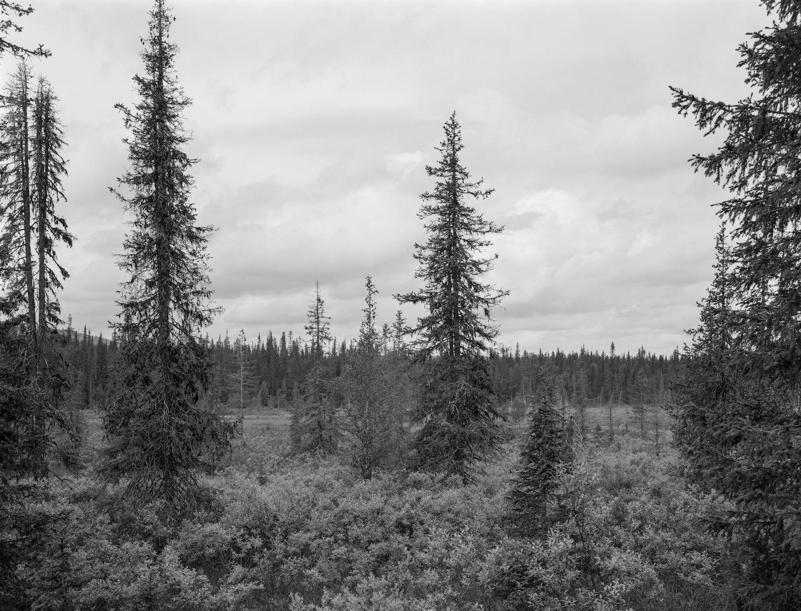 Metsä 94, Äkäskero, Muonio, Finland, 2013, ink-jet print on baryta paper, 74 x 97 cm