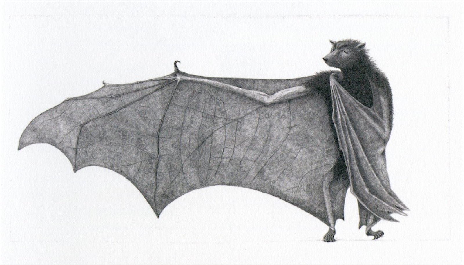 Ulla Fries, filosofen, 2000, fopperplate engraving, 25 x 49 cm, Ed. 90