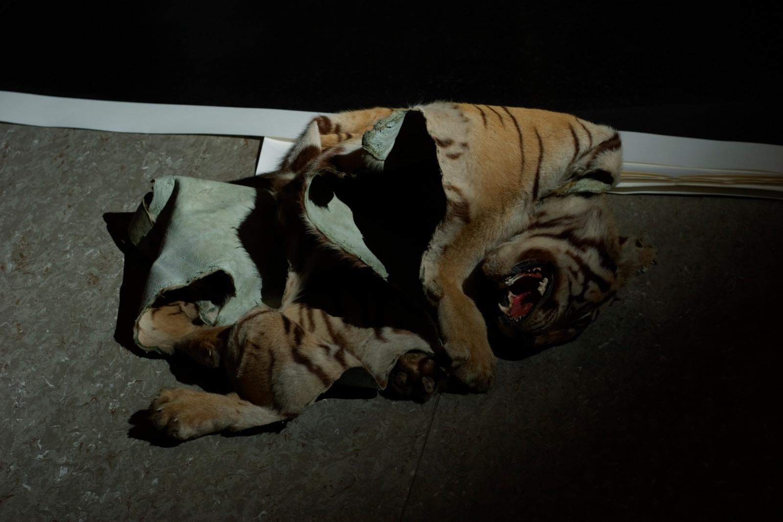 tiger, 2006, C-print, 73 x 103 cm, ed. 5