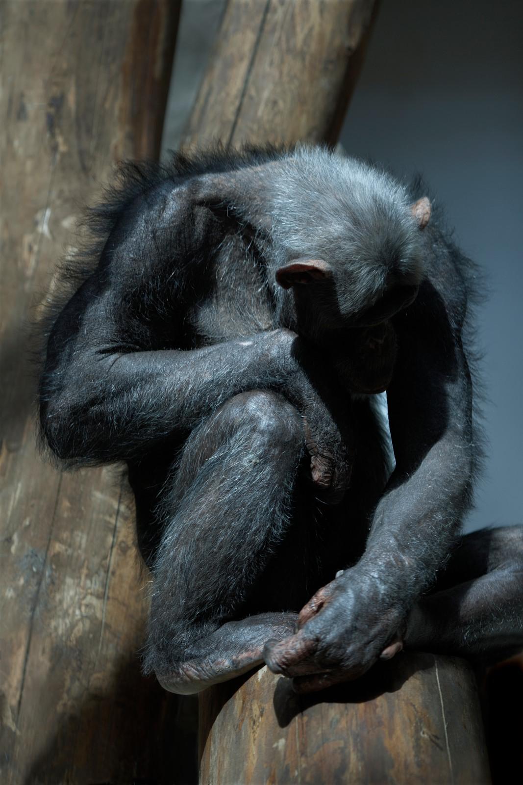 monkey-like, 2010, giclée print mounted on aluminum, 93,3 x 61,3 cm, ed. 5