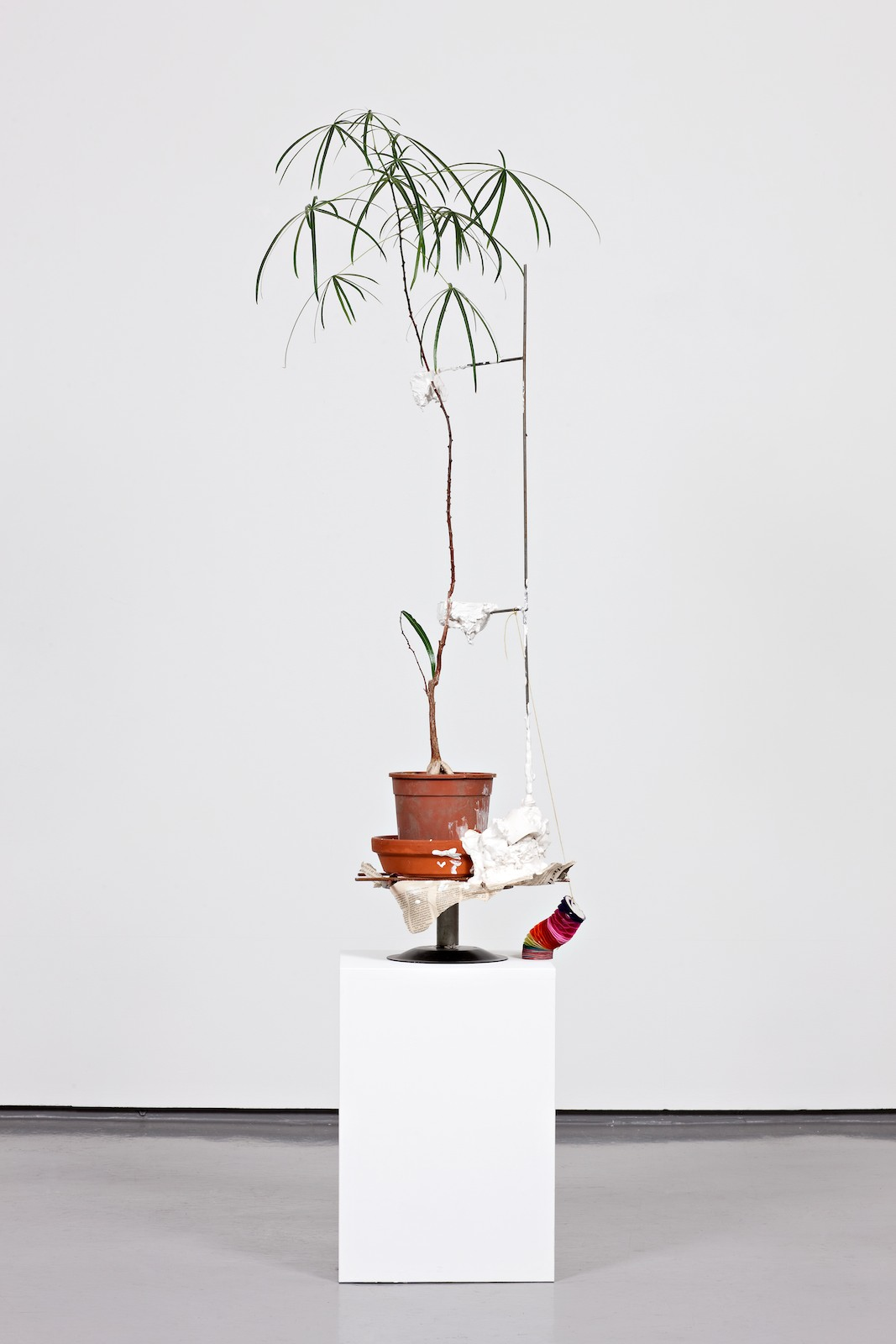 Sustainable (as time grows you will have to pay attention to both plaster and plant. please respect them equally), 2009, bottleneck tree, plaster, iron, paper, ceramic, cavalet, cotillion, ca 110 x 40 x 40 cm