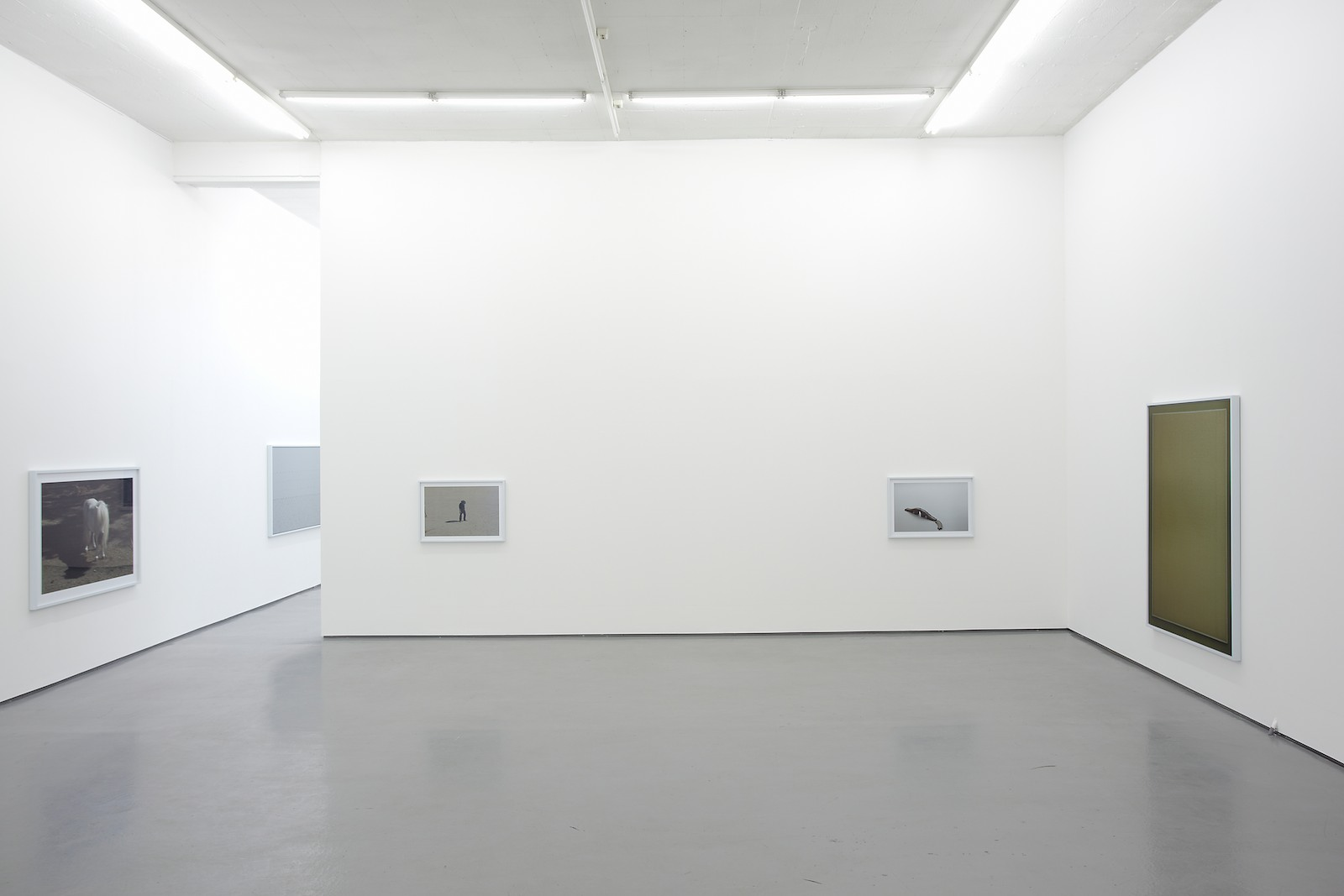 Installation view Morten Andenæs, Observance, Galleri Riis, Oslo, 2011