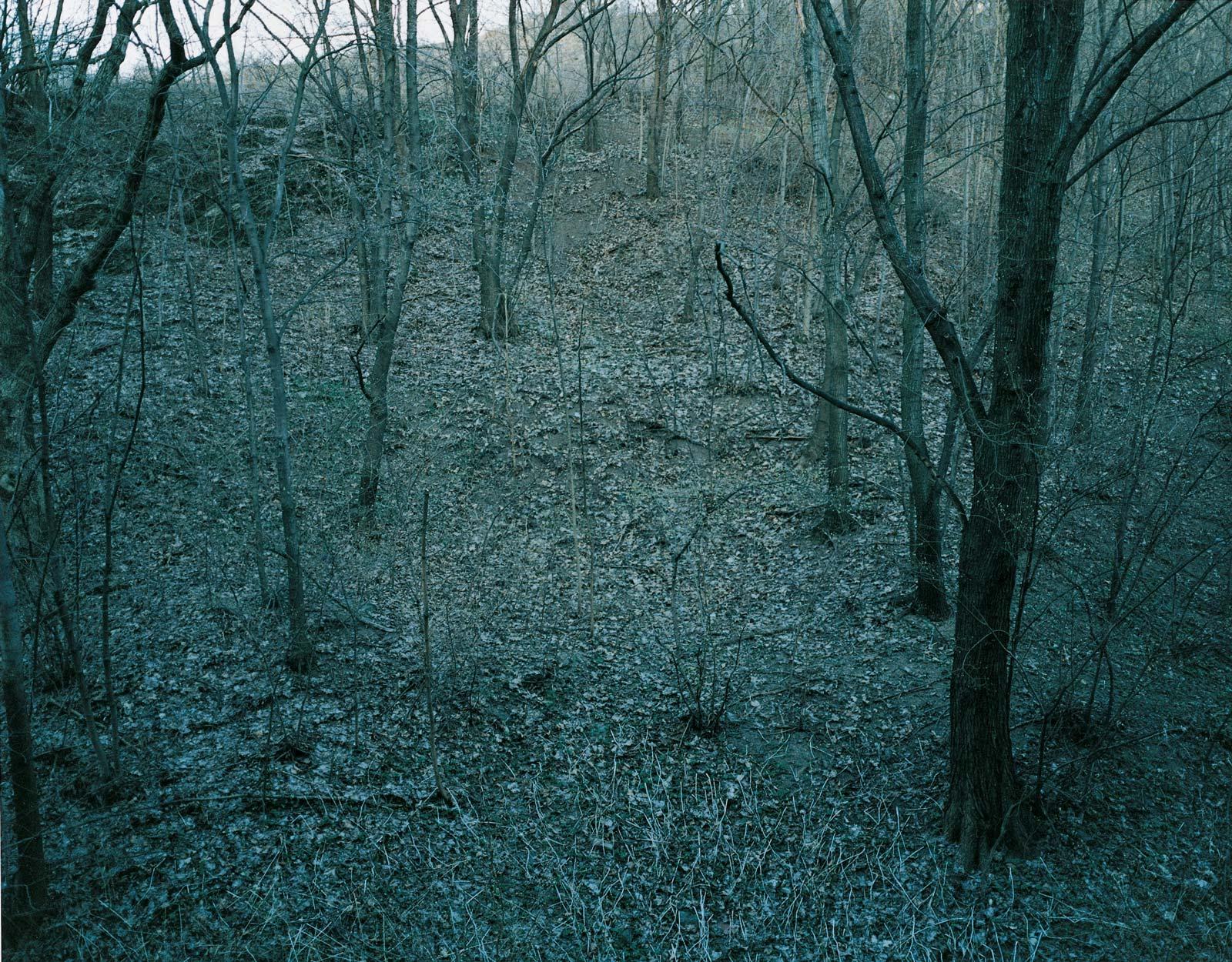 Eline Mugaas, Backyard Forest Grey, 2003, C-print on pvc, 100 x 125 cm