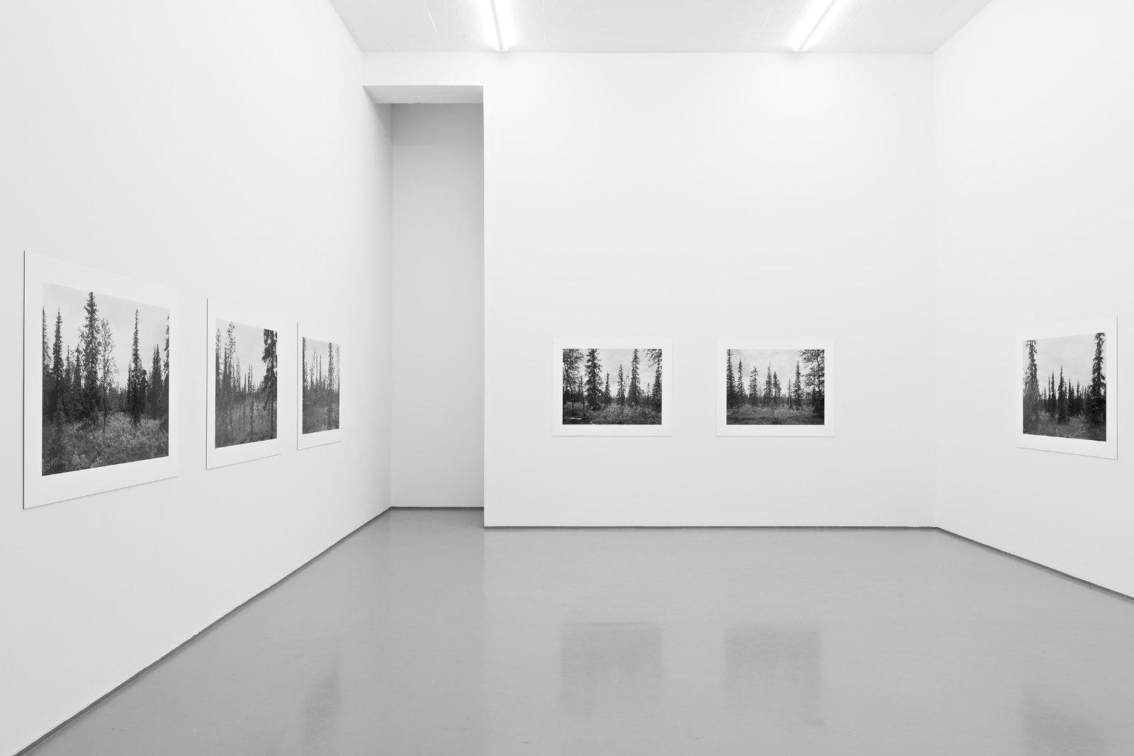 Installation view, Per Berntsen, Metsä - new landscapes, Galleri Riis, Oslo, 2013