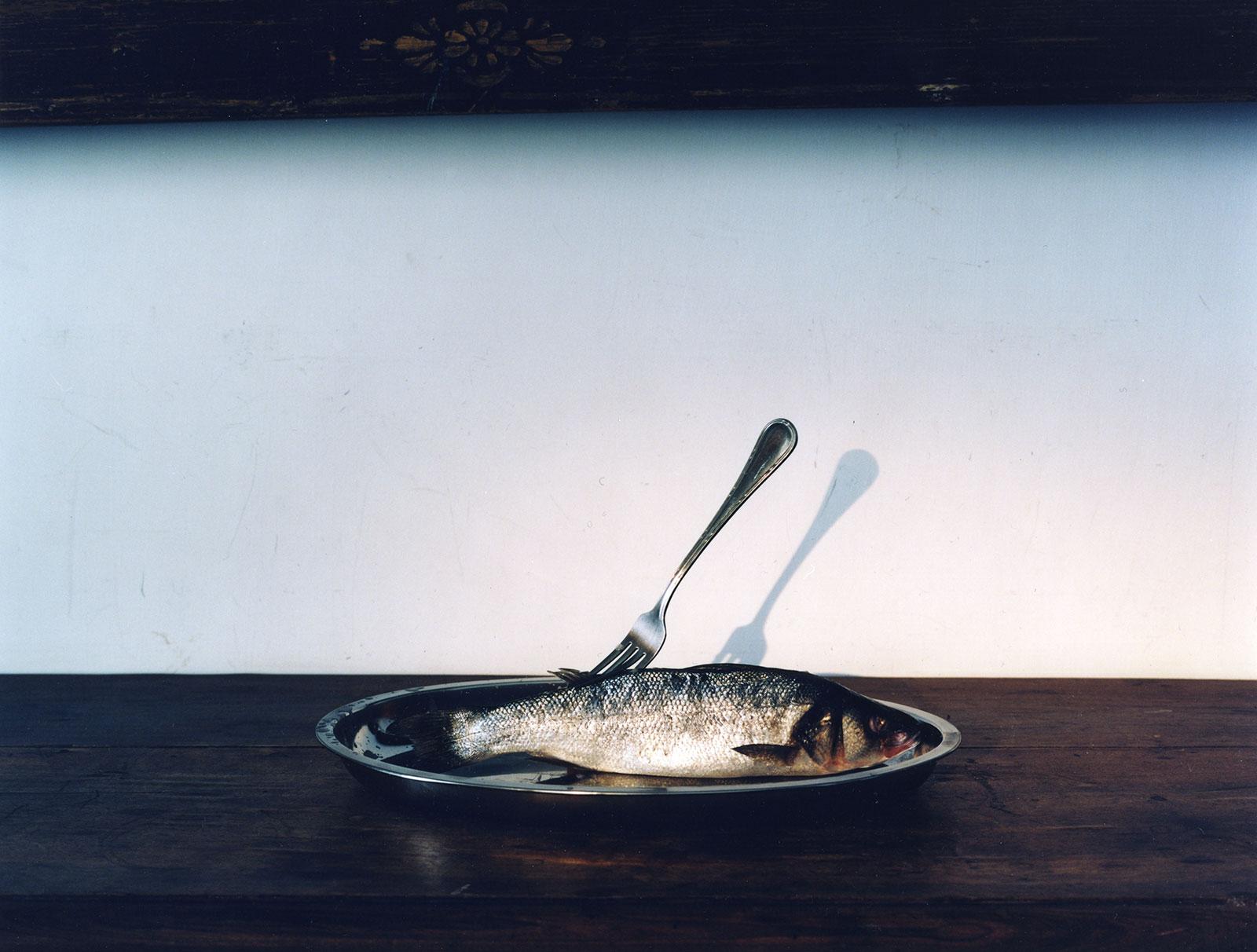 Fish, 2013/2015, C-print, 45,5 x 60 cm, ed. 5