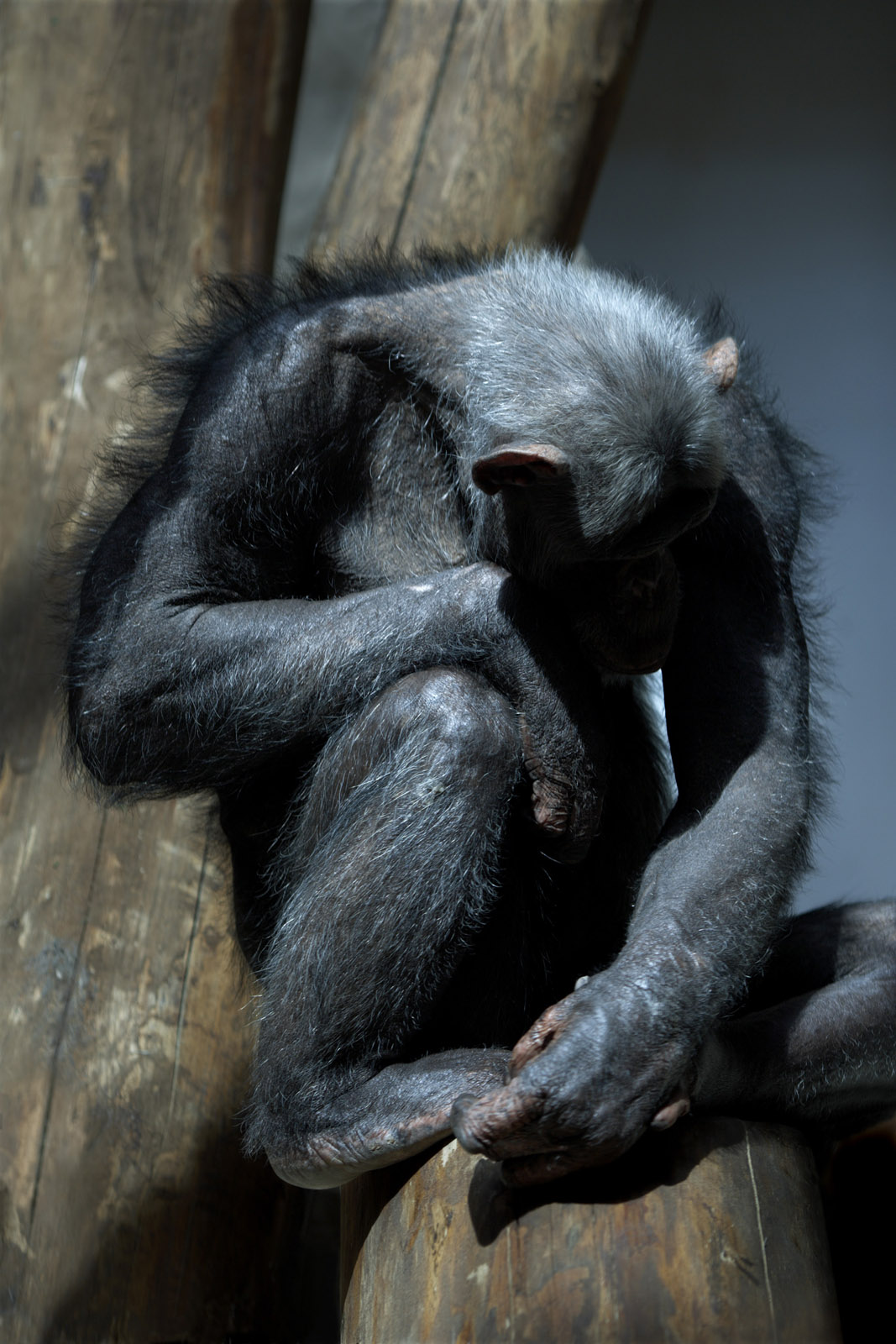 monkey-like, 2010, archival inkjet print mounted on aluminum, 93,3 x 61,3 cm, ed. 5 + AP