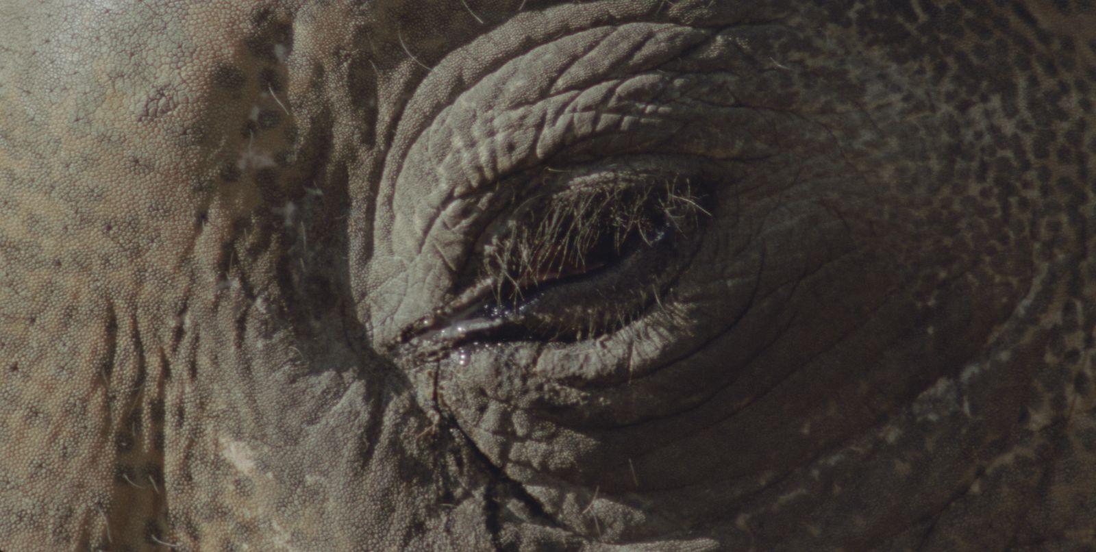 "'Het Grote Geheugen (The Big Memory)', 2008, (excerpt), 35 mm film loop, colour, aspect ratio 4:3; projector, loop system; added: ProRes 422 HQ, 25 fps, aspect ratio 16:9 (1920 x 1080 pixels), ca. 300 x 400 cm, 0'22"""