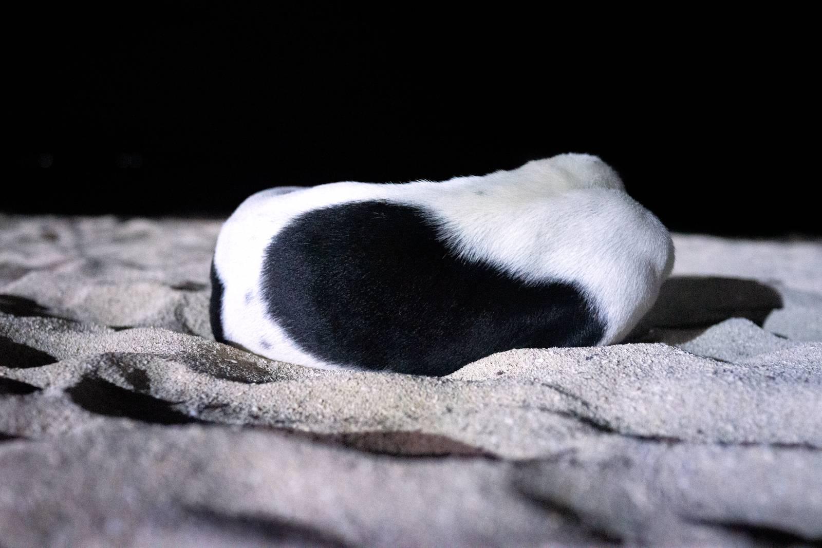 Dog in Dark, 2019. Archival inkjet print, 80 x 120 cm. Ed 5 + 1AP